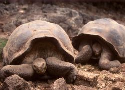 Luxury Ecuador & Galapagos Nature Tour
