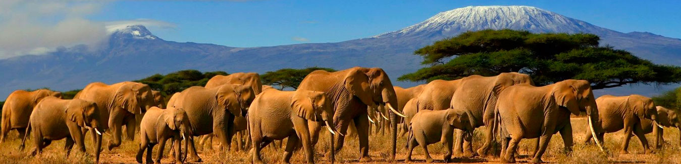 Slider Kenya Tours