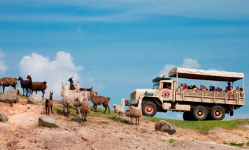 10 day Premium Namibia Road Safari Tour
