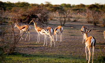7 day Luxury Namibia Flying Safari Tour
