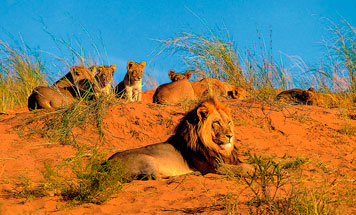 7 day Premium Namibia Flying Safari Tour