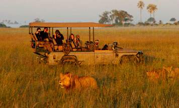 Kenyan Safari Escapes - Discover the Masai Mara
