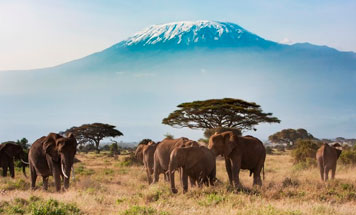 2018 Luxury Tanzania Explorer Tour