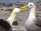 Galapagos Land Based Adventure Tours